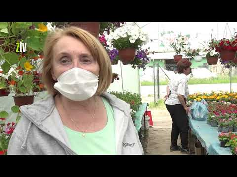 Izolacija i boravak kod kuće tokom korone povećali prodaju cvetnih rasada