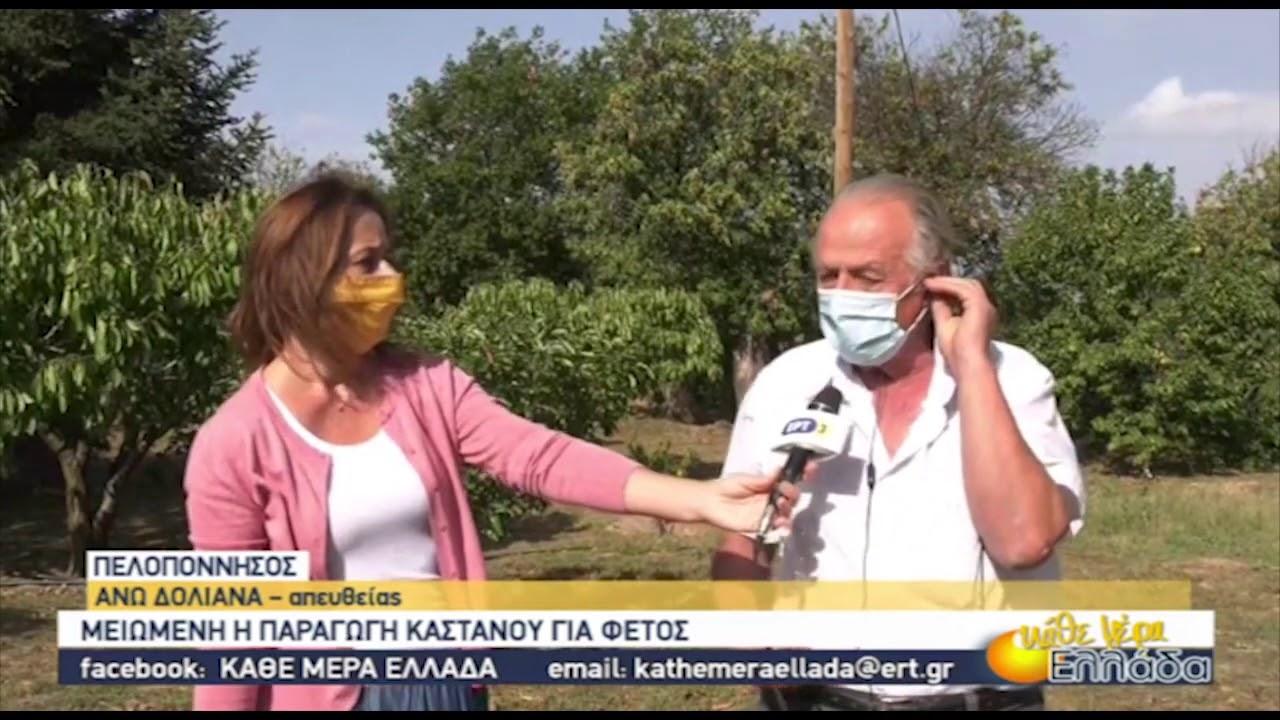 Μειωμένη η παραγωγή κάστανου στα Άνω Δολιανά Πελοποννήσου | 07/10/2020 | ΕΡΤ