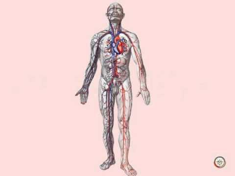Понятия о травмах и ранениях