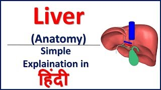Anatomy of Liver simple explaination in Hindi | Bhushan Science