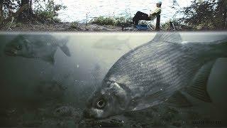 Меласса что это такое для рыбалки