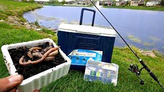 URBAN Pond Micro Fishing! Catching 10 NEW PETS!!!