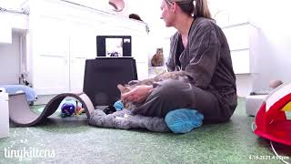 Cat Behavior Q & A with Tabitha from Chirrups and Chatter!