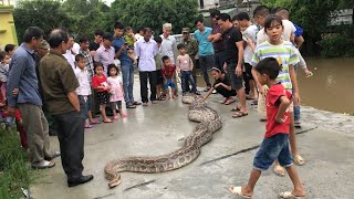 Amazing ! The Biggest Python On The River Bank - Snake Catchers
