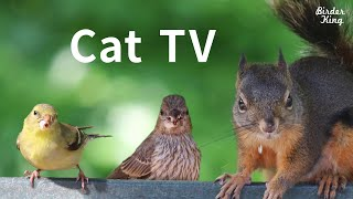 Cat TV 2020: 8 Hours - Birds for Cats to Watch, Relax Your Pets, Beautiful Birds, Squirrels.