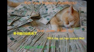 Кот Тика Хорошо заработал. TIKA the cat has earned Well. ティカ猫はよく獲得しています.