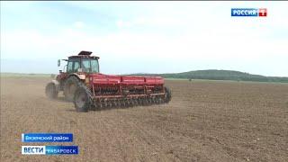 В Хабаровском крае завершили сеять гречиху