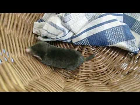 Funny Mole Chasing - Maulwurfsjagd