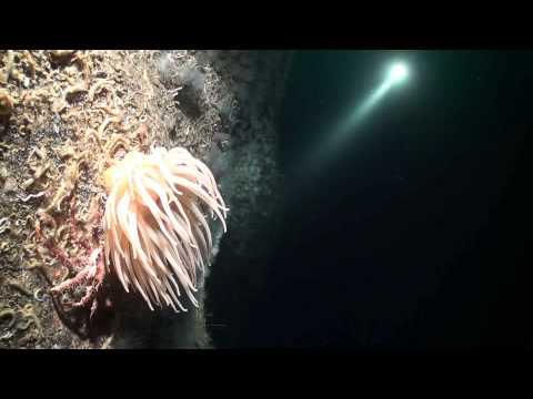 Steilwand - Nachttauchgang