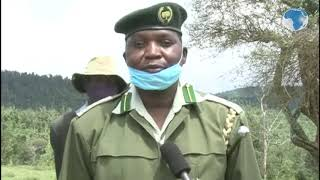 Youths attack, injure KFS officer in Kirisia Forest - VIDEO