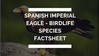 Spanish Imperial Eagle - BirdLife species factsheet