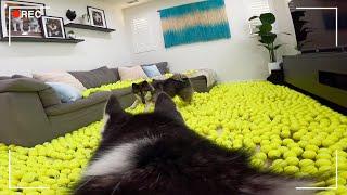 테니스공 2000개를 집에 놓자....