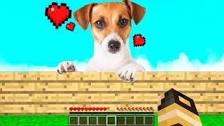 HO ADOTTATO UN CAGNOLINO! - Casa di Minecraft #44