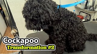 Cockapoo GROOMING Transformation #2 | Pet | Dog Grooming | The Dog