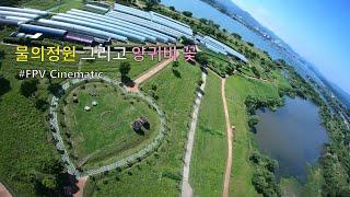 남양주 물의정원 그리고 양귀비 꽃 / FPV Drone 영상