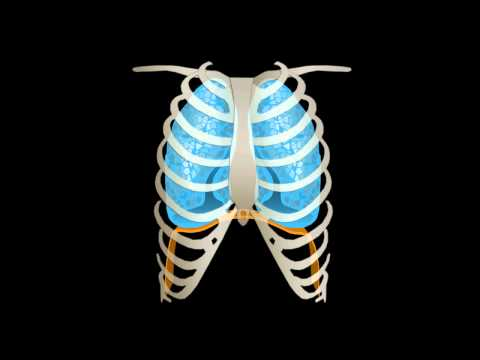 Dolore nella parte centrale destra della schiena