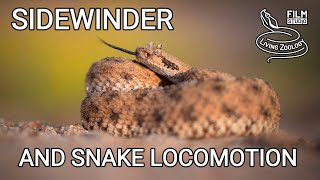 Venomous Sidewinder rattlesnake, sidewinding and other types of snake movement, snakes of the world