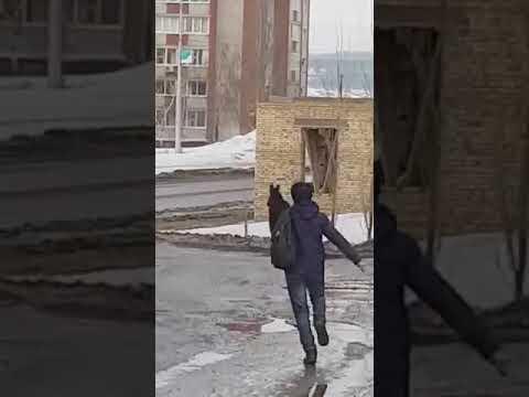 Женщина прогнала лося, кинув в него своего кота