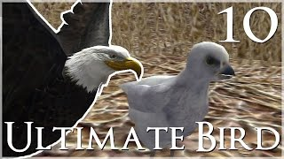 Our Baby Eaglet Hatches!! 🐦 Ultimate Bird Simulator - Episode #10