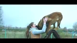 Смотреть онлайн Грустный стих про собаку дворнягу