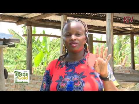 SEEDS OF GOLD: How to become a millionaire through pig-rearing