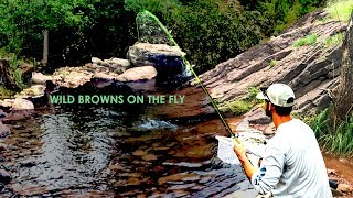 Mogollon Rim Fly Fishing Brown Trout | Arizona