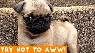 Ultimate Try Not to Aww Compilation May 2018 | Funny Pet Videos