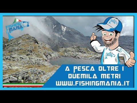 Video su fishings nutrenti