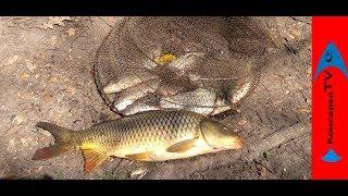 Рыбалка когда лучше ловить карпа весной