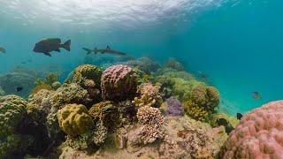 GoPro Awards: Fusion Reef Radio