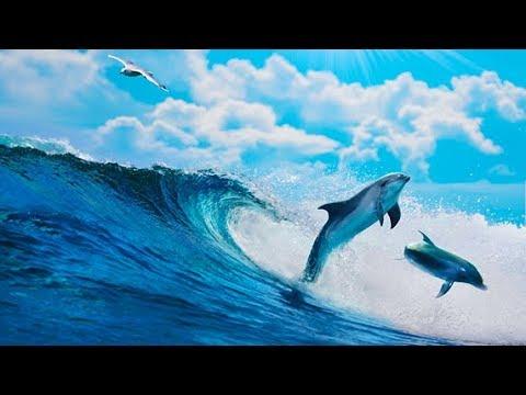 Wie es schnell ist, im Wasser abzumagern