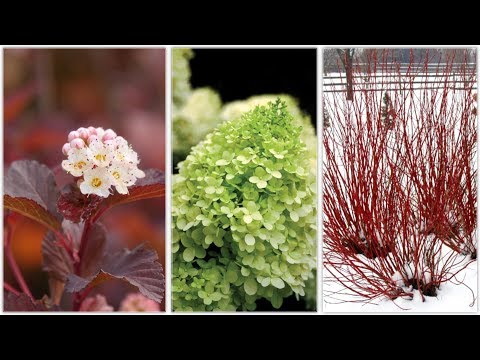 Landscape Makeover Part 3: Three Shrubs for All Year Interest! 🌿🙌💚// Garden Answer