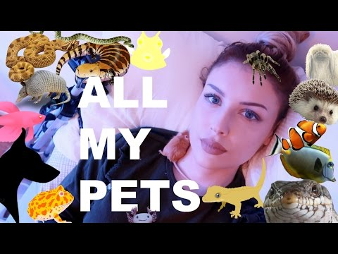 ALL OF MY PETS IN ONE VIDEO (I Know, I Have A Lot)
