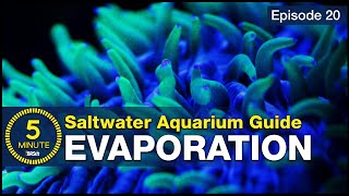 Get saltwater tank evaporation right! This is how it's done and it is VERY easy.