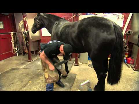 Oddly soothing: U.S. Army farrier shoes a horse that serves at the Arlington National Cemetery