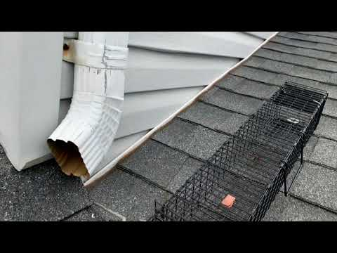 Removing Squirrels from this Home in Point Pleasant Beach, NJ