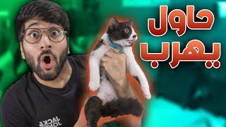 جربت اختبار ذكاء لقطتي 🐈🧠!! (( نتيجته صدمتني 🤣 )) !! اختبار دوشق || CAT IQ TEST