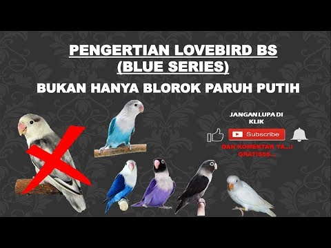 mp4 Lovebird Bs, download Lovebird Bs video klip Lovebird Bs