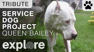 Service Dog Project's Queen Bailey - Tribute Video