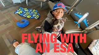 FLYING WITH AN EMOTIONAL SUPPORT ANIMAL (ESA)   SOUTHWEST AIRLINES !