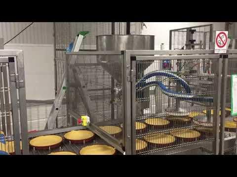 Artigianale Cake Line P81126050