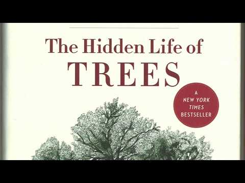 The Hidden Life of Trees Chapter One: Friendships