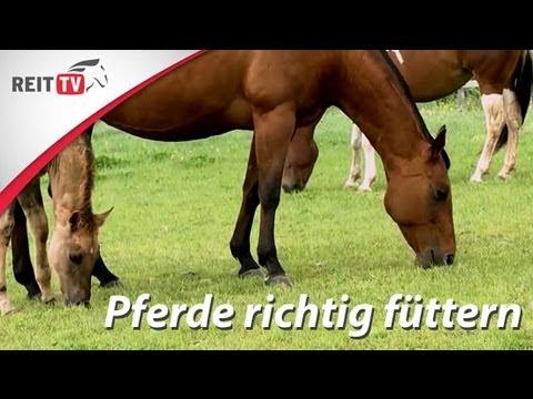 Pferdegesundheit | Futter im Winter - die richtige Fütterung nach der Weidesaison