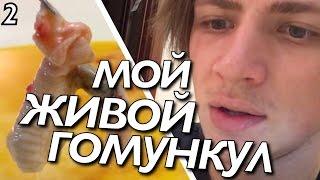 МОЙ ЖИВОЙ ГОМУНКУЛ #2 (20 дней) / Андрей Мартыненко