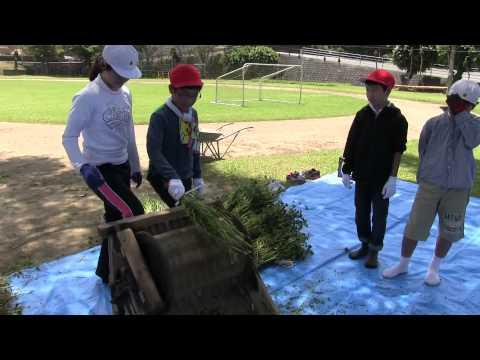 種子島の学校活動:上西小学校そばの収穫体験学習ダイジェスト