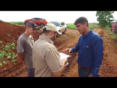 Silagem de trigo é aposta de pecuaristas para alimentação do gado