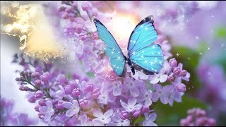 """Peaceful Music,  Relaxing Music"""" Dedicated to Gemma Nuttall"""" by Tim Janis"""