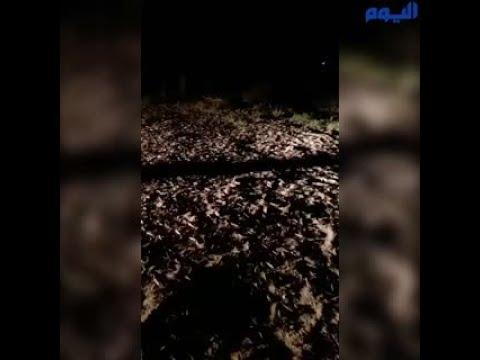 السيطرة على  «سرب الجراد»  في قرية الخرائق بالطائف