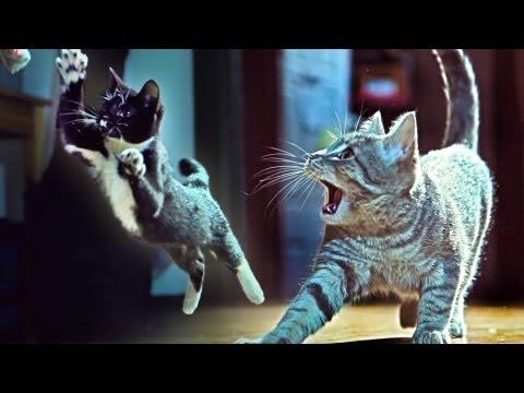 Mèo Con hành động