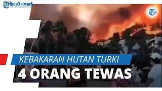 Kebakaran Hutan Melanda Turki, 20 Desa Dievakuasi, 4 Orang Tewas dan 58 Dirawat karena Luka Bakar